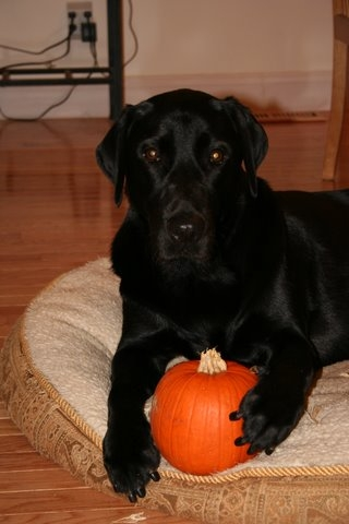 Aedan with pumpkin